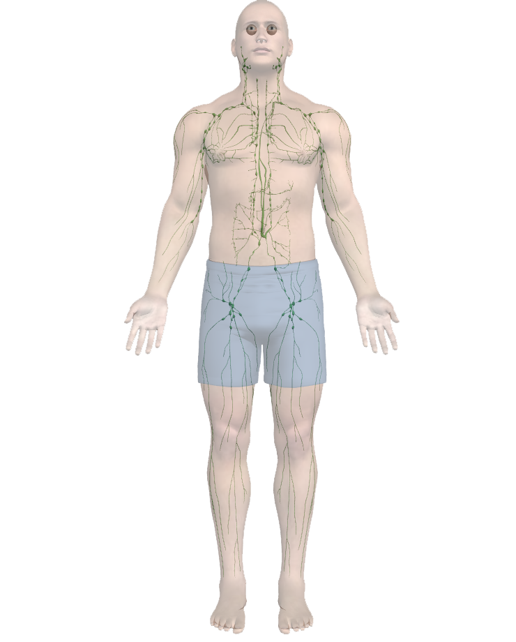 body-lymph